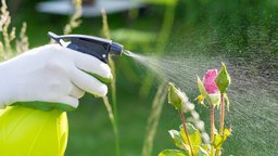 Understanding Pesticides
